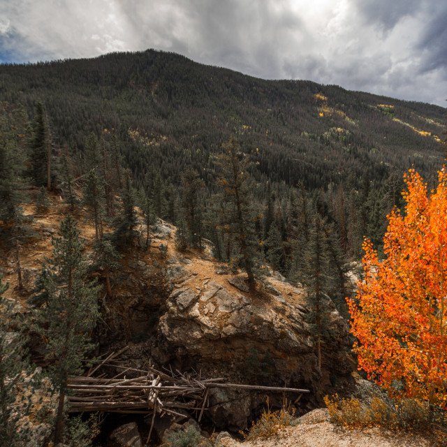"""Single orange mountain tree in Colorado"" stock image"