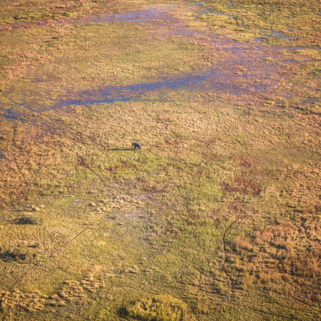 """Solitude in the Okavango Delta"" stock image"