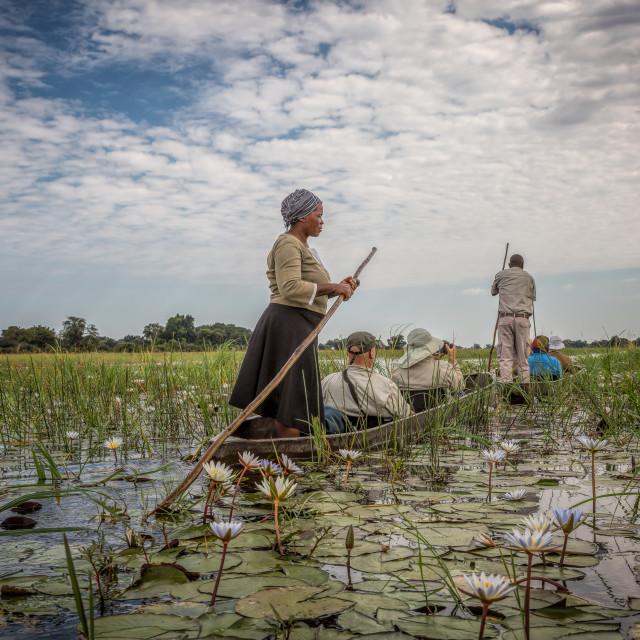 """Okavango Delta"" stock image"