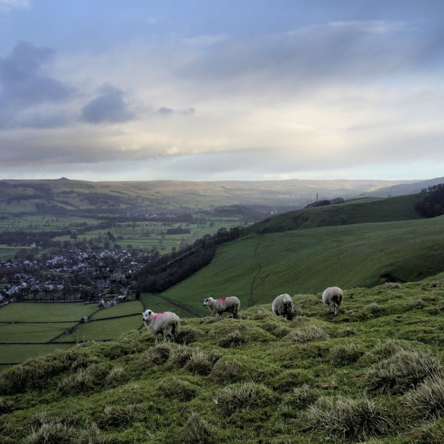 """Sheep over Castleton."" stock image"