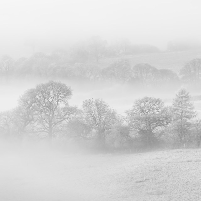 """Misty Monochrome Morning"" stock image"