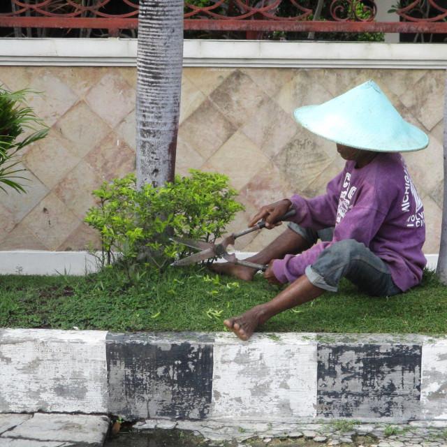 """Oriental gardener, Indonesia"" stock image"