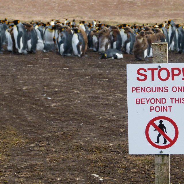 """Penguins Only"" stock image"