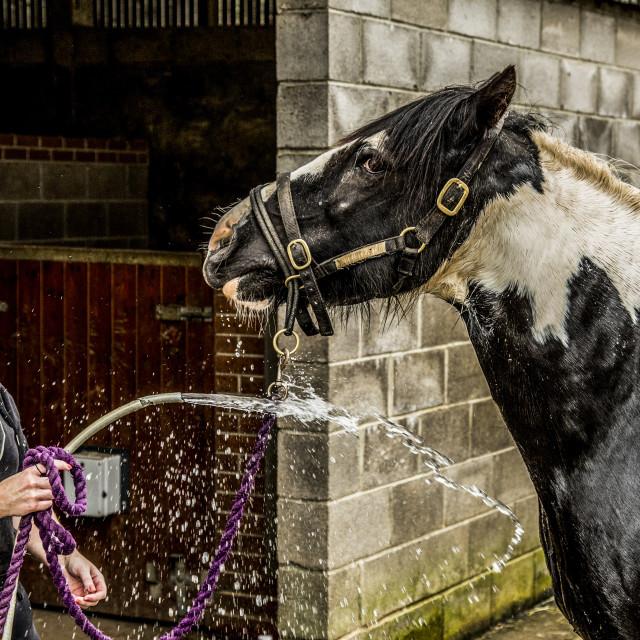 """""""Horse & Hose"""" stock image"""