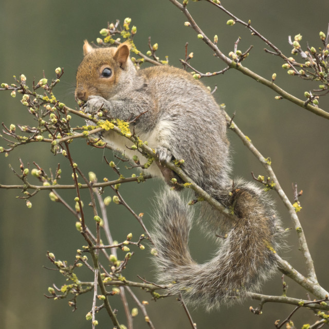 """Spring Squirrel"" stock image"