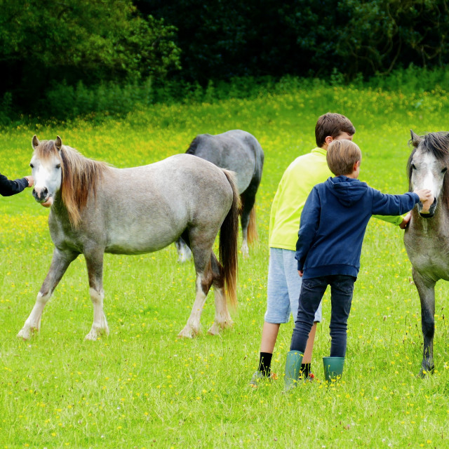 """Children with horses"" stock image"