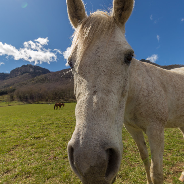 """""""Typical Spanish horse in a farmland ancient village Hostales den Bas in Catalonia of Spain"""" stock image"""