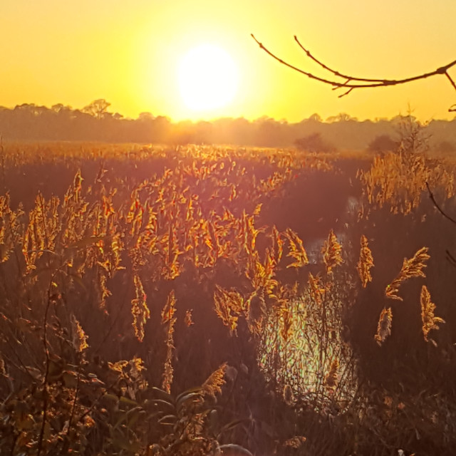 """Sunset over the reeds"" stock image"