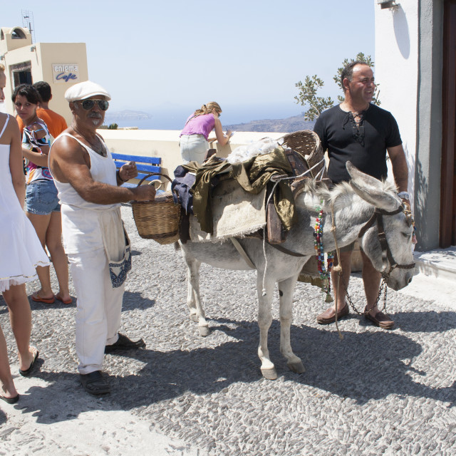 """Donkey on Fira"" stock image"