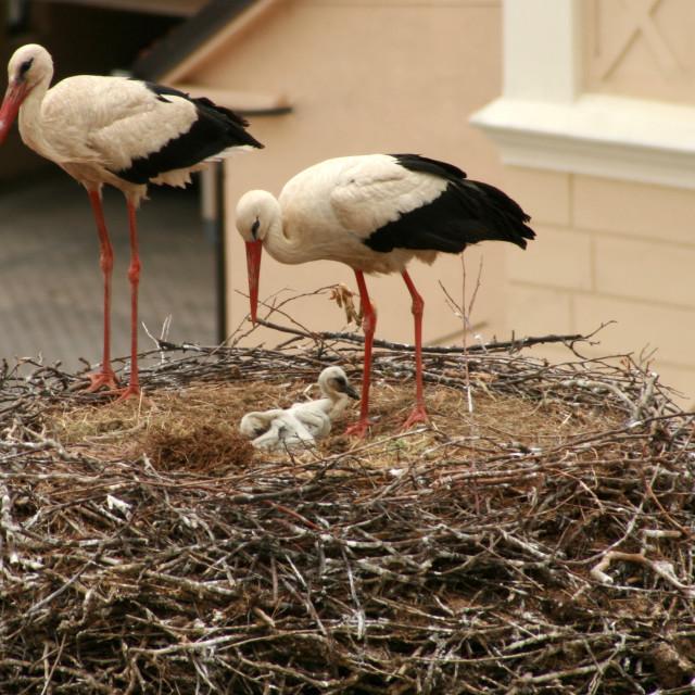 """Stork"" stock image"