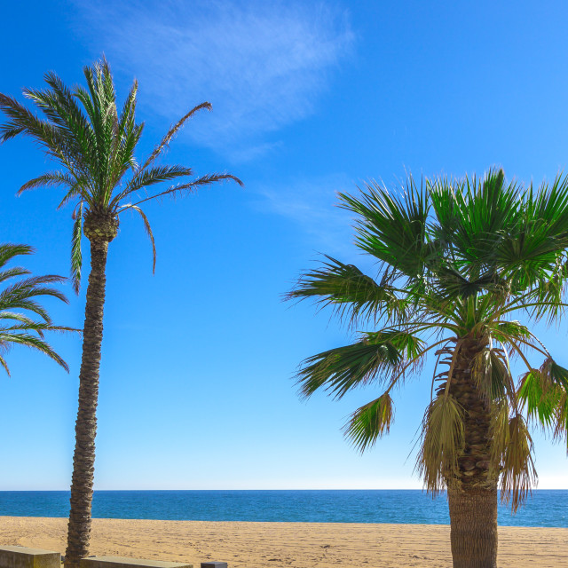 """""""Palm trees at the beach"""" stock image"""