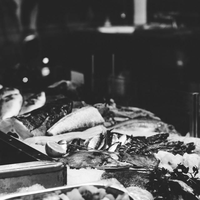 """Fishy"" stock image"