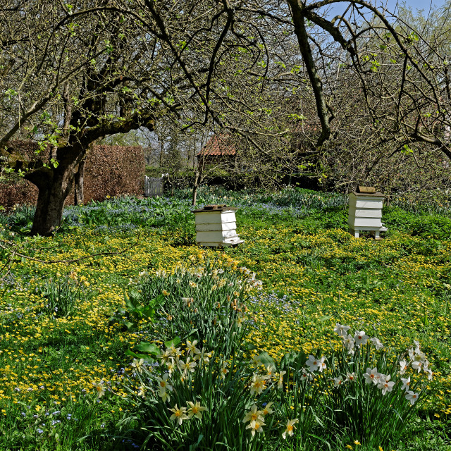 """Old Bee Hives in an Orchard"" stock image"