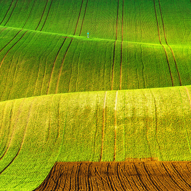 """Rolling spring fields. Arable lands in Czech Moravia."" stock image"