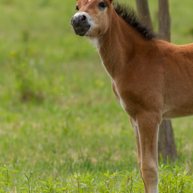 """""""Nice foal on the meadow in springtime"""" stock image"""