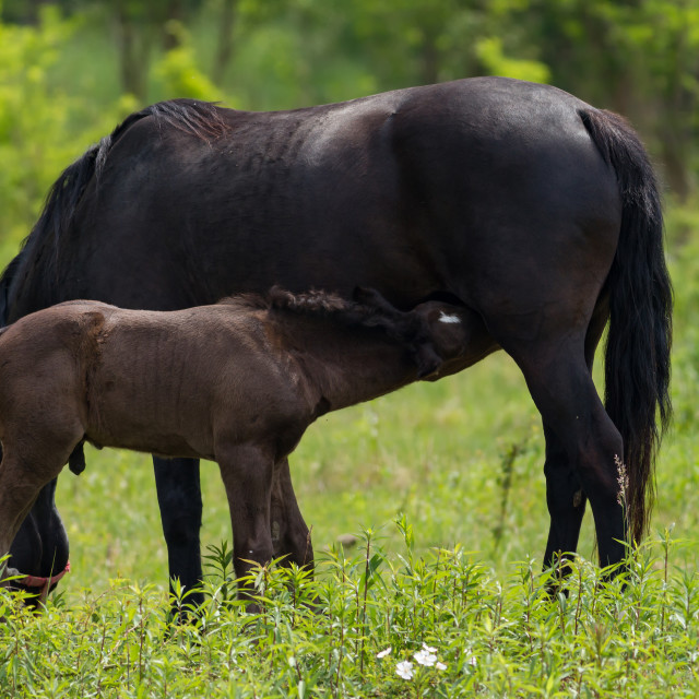 """""""Nice horse family on the pasture"""" stock image"""