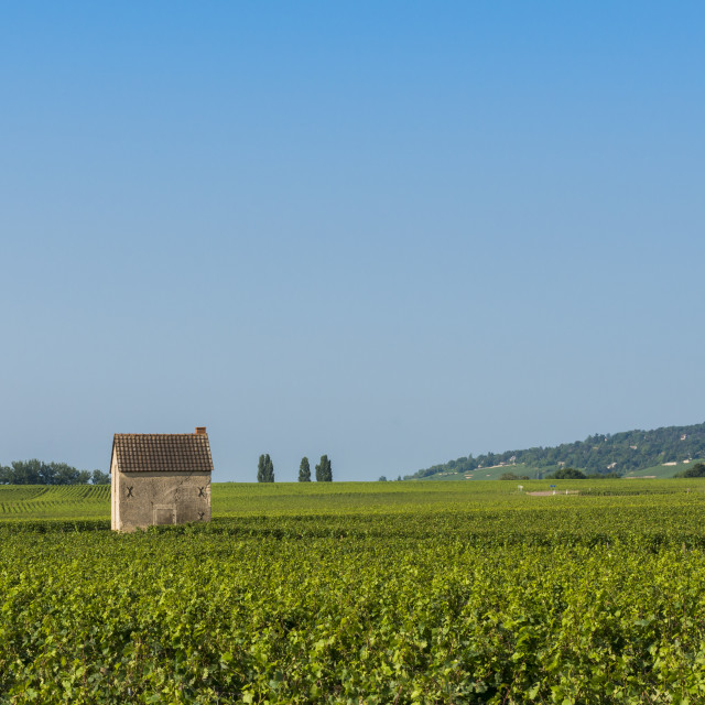 """Vineyard in Beaune with Little House"" stock image"