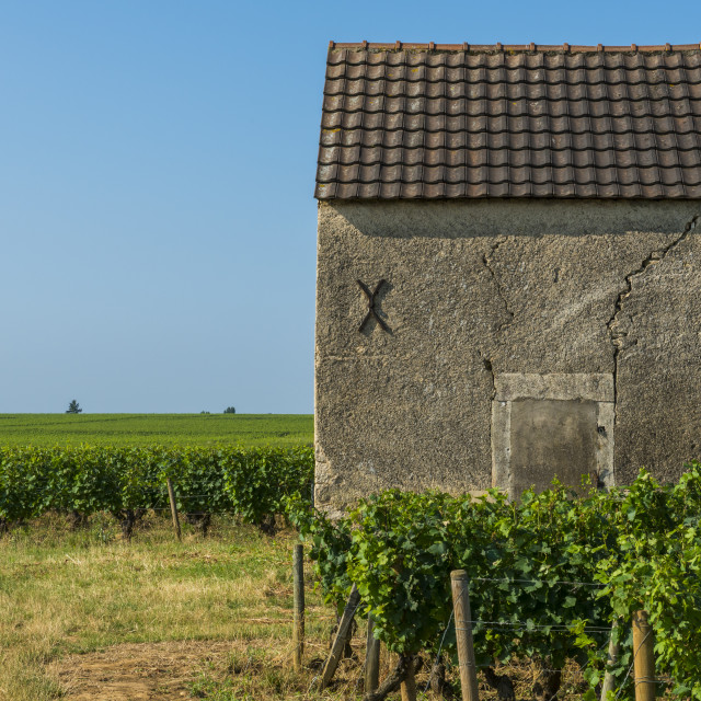 """Vineyard in Beaune with House"" stock image"