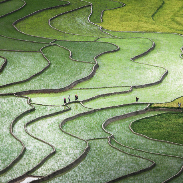 """Terrace paddies in North Vietnam"" stock image"