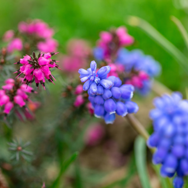"""""""Purple and violet flowers 1"""" stock image"""