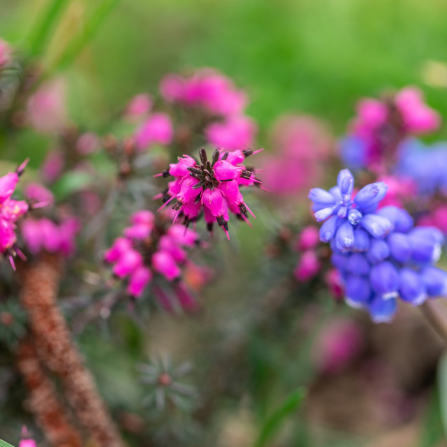 """""""Purple and violet flowers 2"""" stock image"""