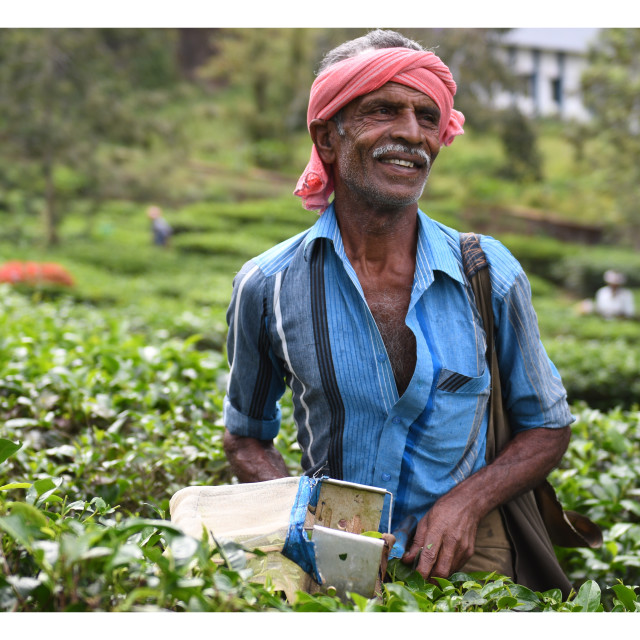 """Tea pickers of kerala"" stock image"