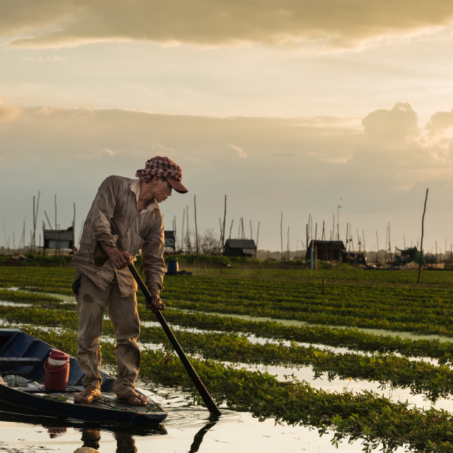 """Khmer farmer"" stock image"