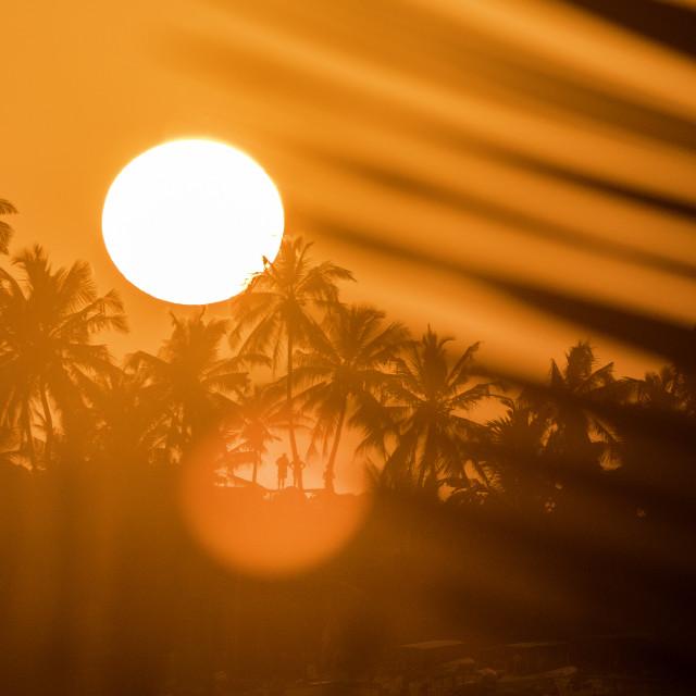 """""""Palmtree Sunset"""" stock image"""