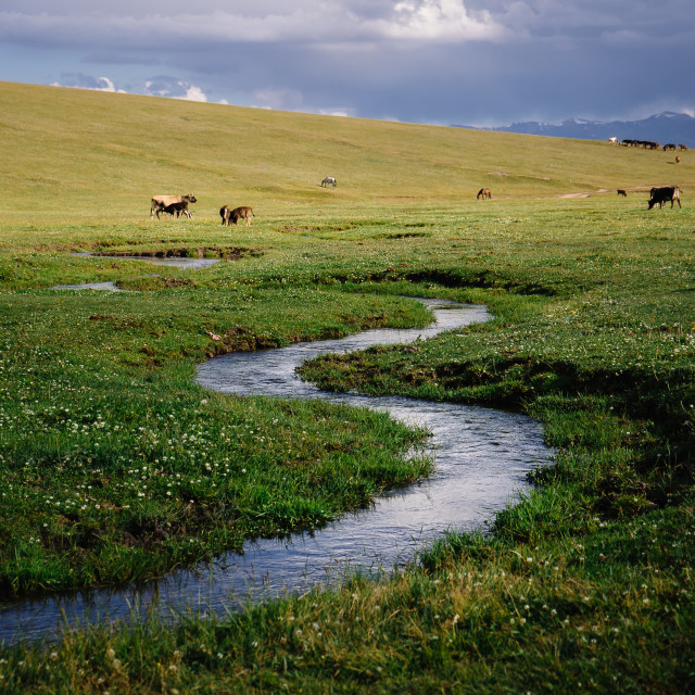 """Tien Shan summer meadows in Kyrgyzstan"" stock image"