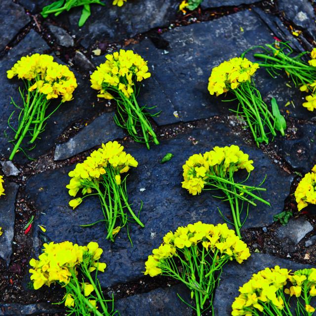"""reform flowers in Ha Giang, Vietnam"" stock image"