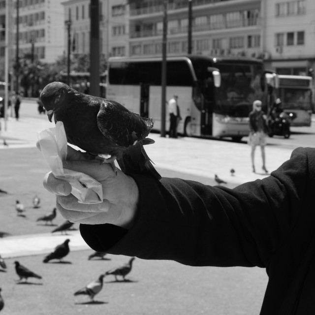 """man pigeon syntagma square"" stock image"