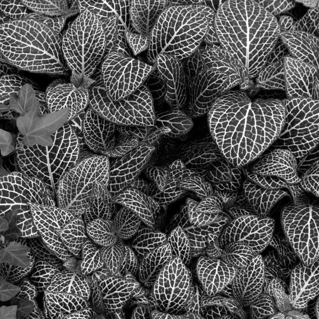 """""""nerve plant leaf background"""" stock image"""