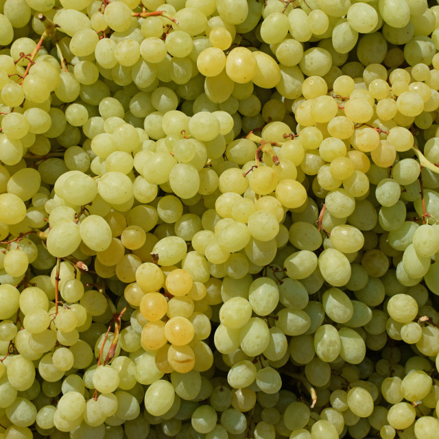 """seedless grapes background"" stock image"