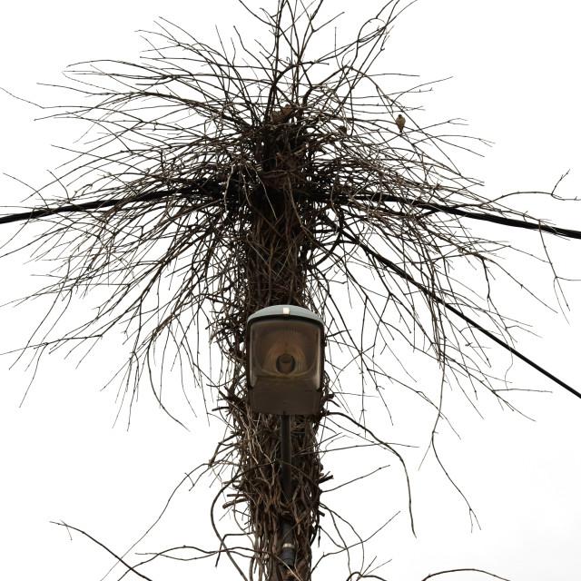 """street light branches birds nest"" stock image"