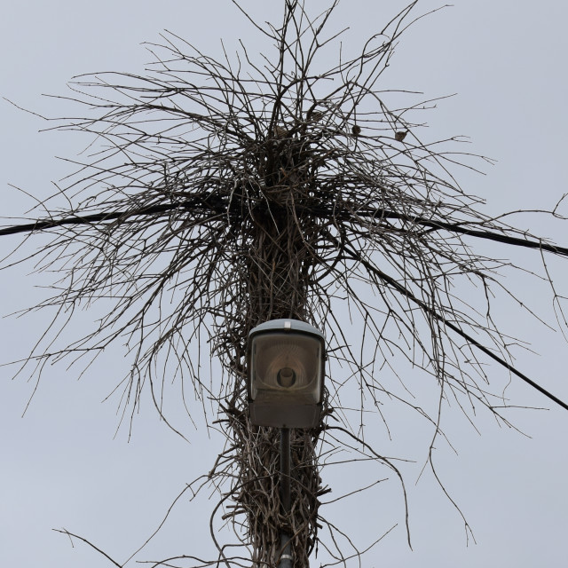"""street light branches"" stock image"
