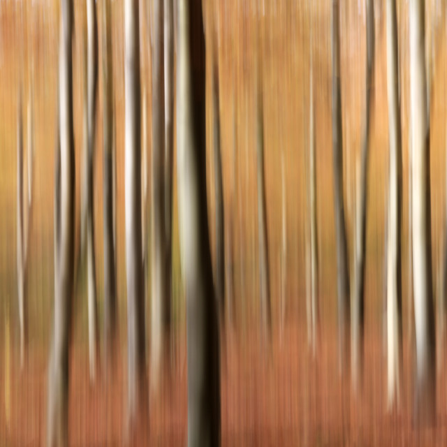"""""""Impression of Friston Forest, Sussex"""" stock image"""