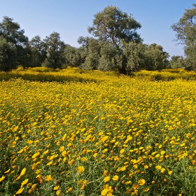 """Wildflower Meadow"" stock image"