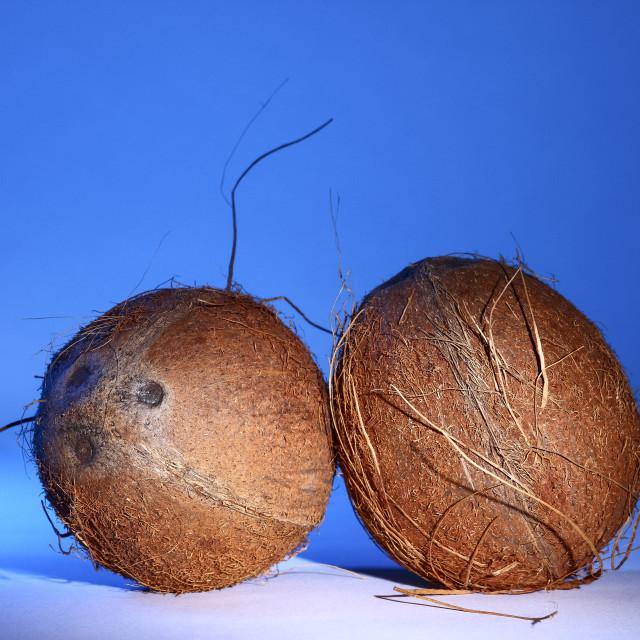 """Ripe tropical coconut fruit"" stock image"