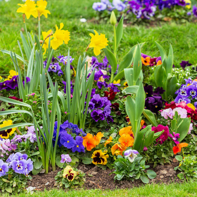 """""""Decorative flowers in the park 2"""" stock image"""
