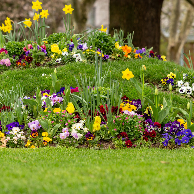 """""""Decorative flowers in the park 1"""" stock image"""