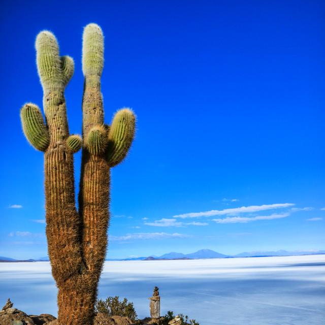 """""""Isla Incahuasi and Salt Flat of Uyuni"""" stock image"""