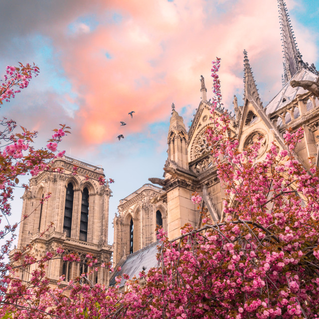 """Paris spring time"" stock image"