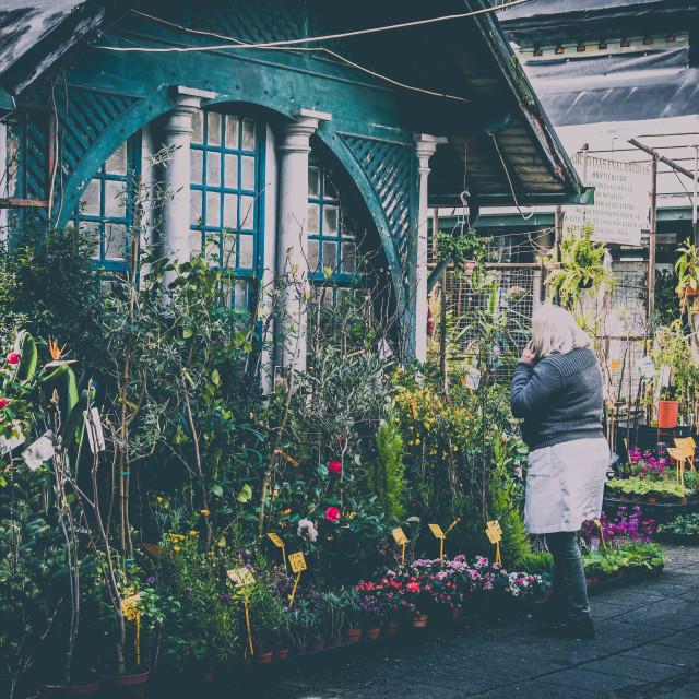 """""""Flower stall"""" stock image"""