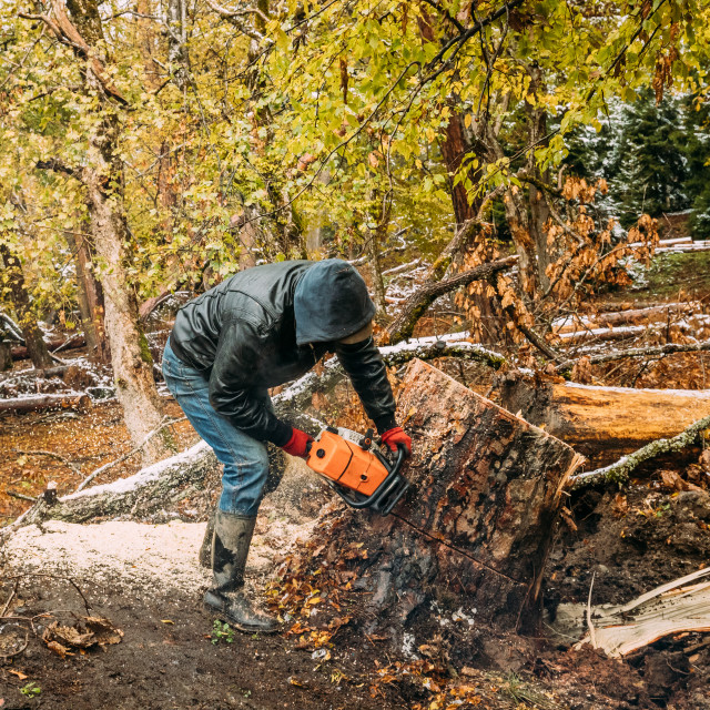 """Borjomi, Georgia. Man Sawing Tree In Forest With A Chainsaw"" stock image"