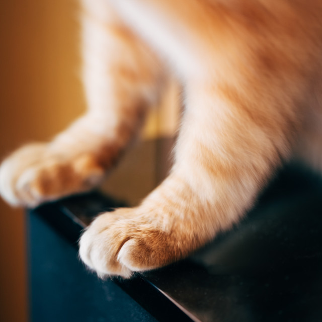 """Close Up Paw Pads Of Red Cat Kitten"" stock image"