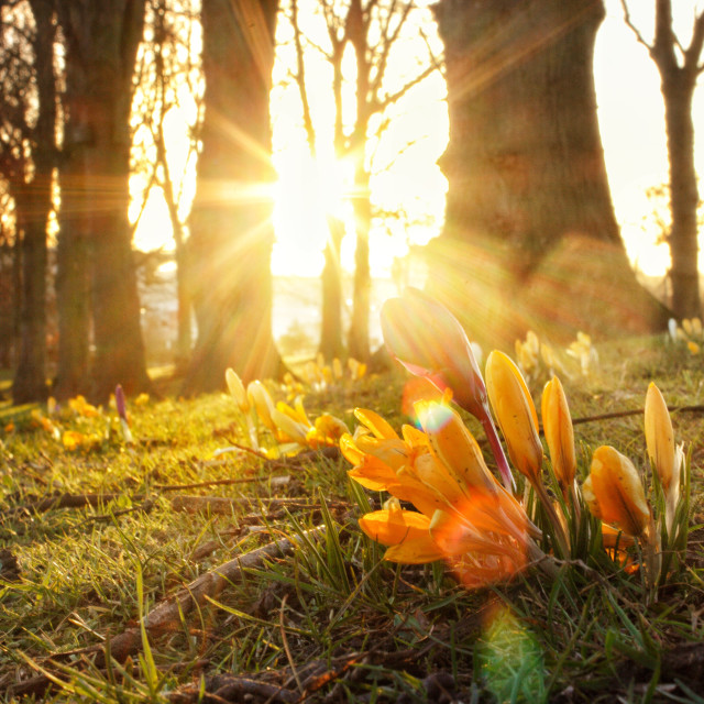 """Spring has sprung"" stock image"