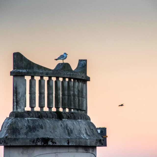 """Seagull at sunset"" stock image"