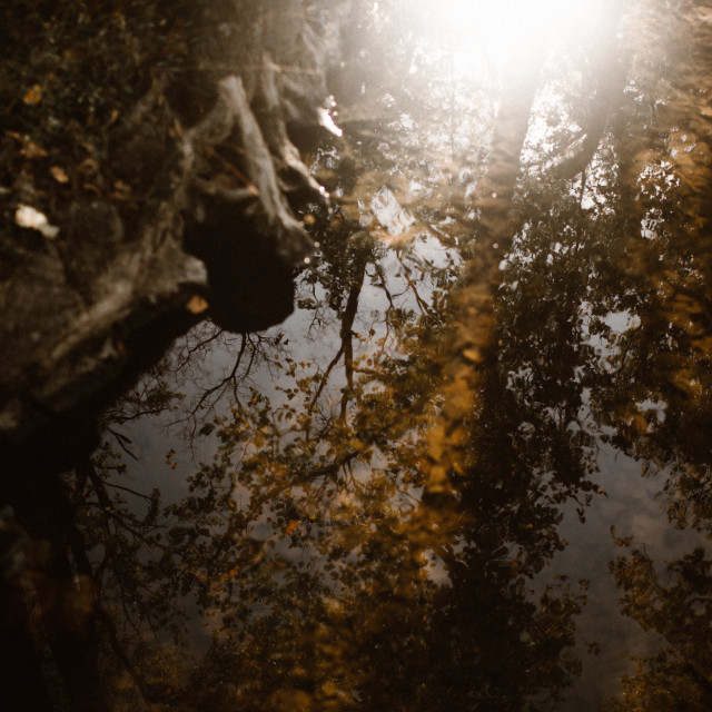 """""""Creek reflection in Autumn"""" stock image"""