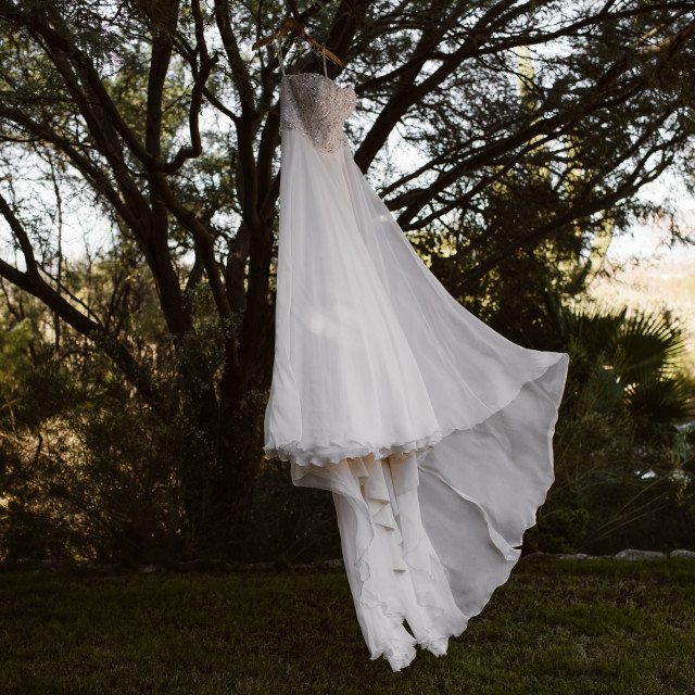 """""""Wedding Dress Hanging in A tree"""" stock image"""