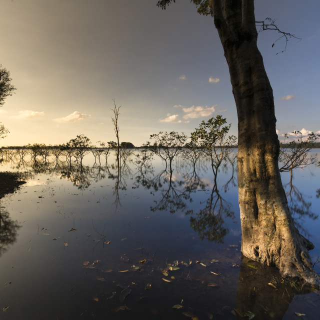 """A row of flooded trees with their reflections in the lake at sunset."" stock image"